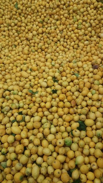 agrumes Italie