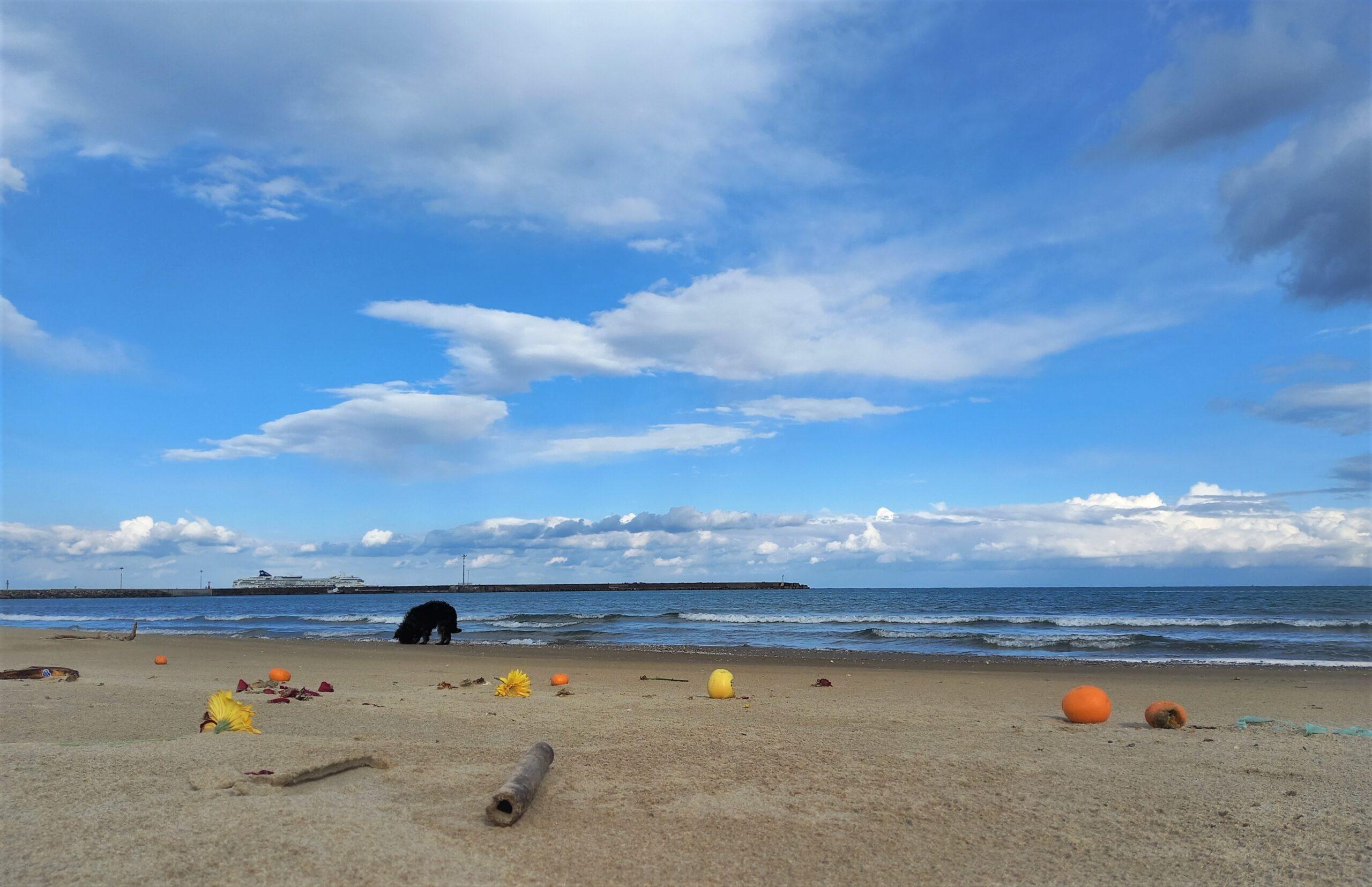 arte involontaria museo del mare playa catania