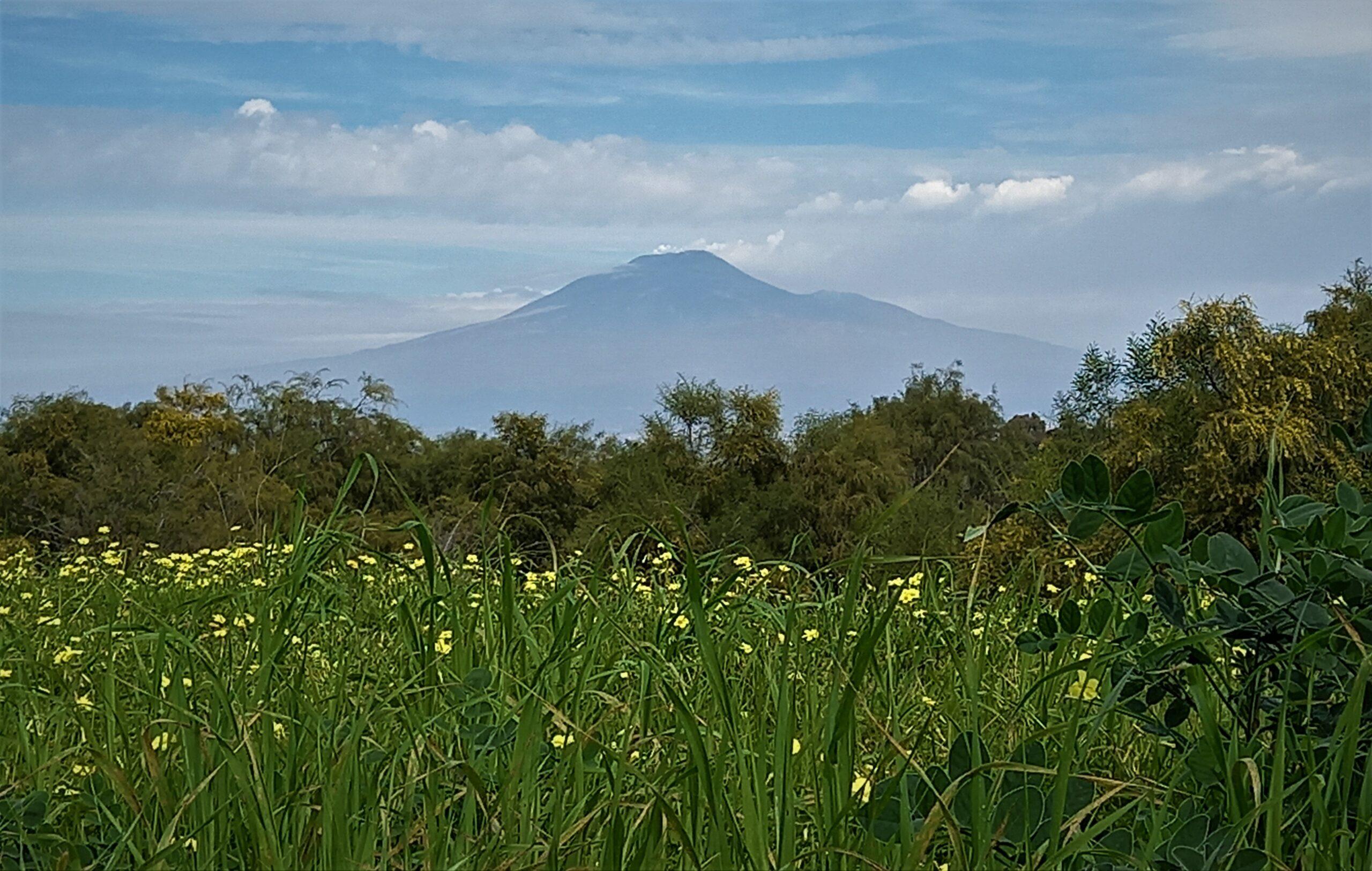 etna oasi del simeto sicily needs love
